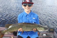 Aeden Liebersbach, age 11, Mauston, WI, 34 1/2-incher (first musky), Wisconsin River, WI. He caught it on his first cast of the day.